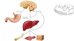 مصرف کنندگان هورمون رشد به هوش باشند ,علت ابتلا به فشار خون,درمان کم کاری غده هیپوفیز,هورمون سوماتروپین چیست,عوارض استفاده از هورمون رشد,کاردیومیوپاتی