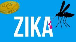 درمان بیماری زیکا