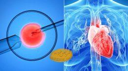 ارتباط درمان ناموفق ناباروری با افزایش خطر ابتلا به بیماری های قلبی